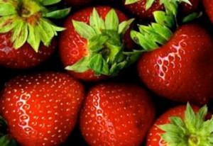 Fraicheur aliments frigo agro alimentaire Afatek